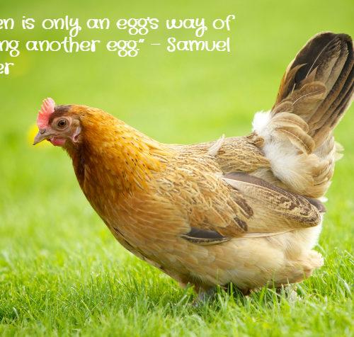 Chicken Quote