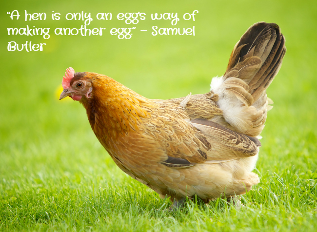 Chicken Egg Or The Quotes Quotesgram: Chicken Quote