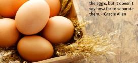 Eggs Quote