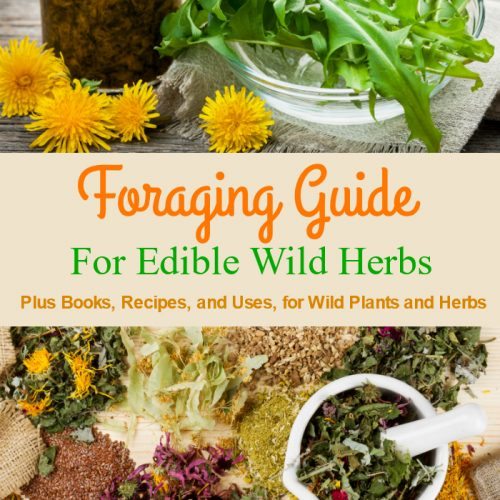 Edible Wild Plants, Foraging Herbs in the Wild