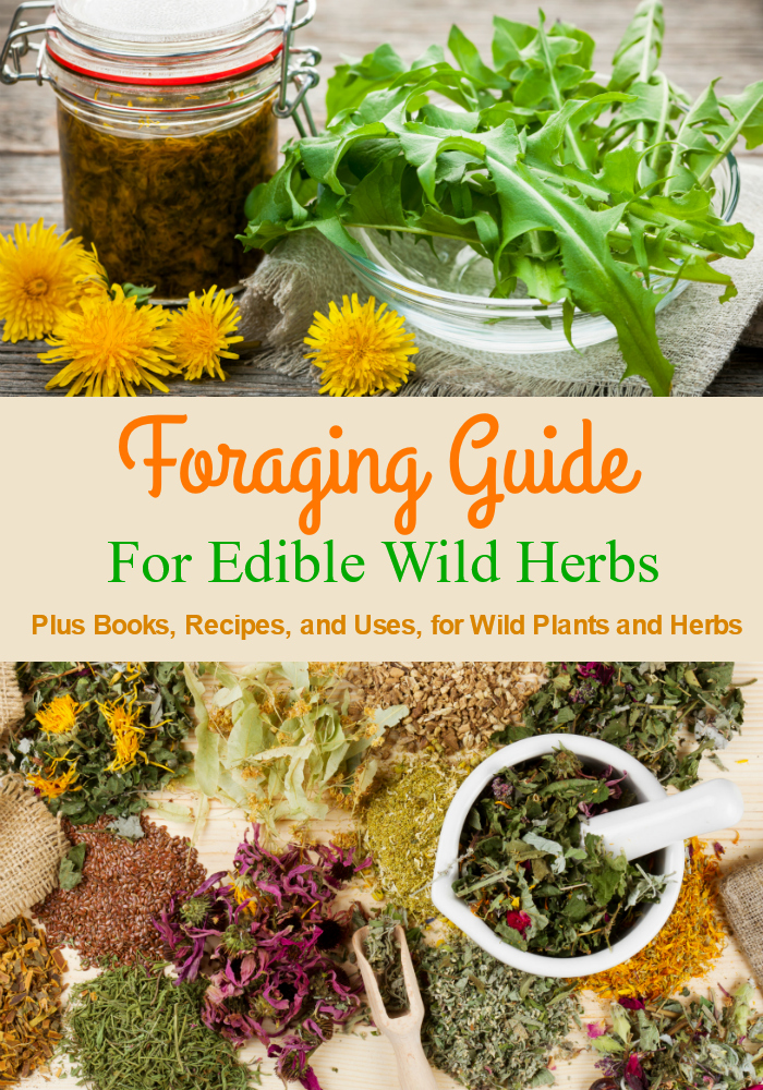 Foraging Guide for Edible Wild Plants and Herbs. Plus the best books, recipes, and uses for wild and homegrown herbs. #foraging #guide #herbs #plants #wildplants