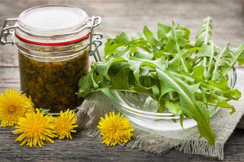 Foraged edible dandelions and dandelion preserves